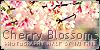 CherryBlossomPhotos