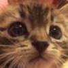 CherryBombWitheredGi's avatar