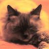 cheshire102's avatar