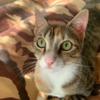 CheshireBlaze's avatar
