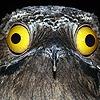 Chi-Bird's avatar