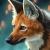 Chiakiro's avatar