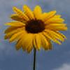 chibiamy's avatar