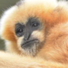 ChickenHeadTV's avatar