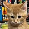 chikachi98's avatar