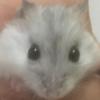 chikicukoneko's avatar
