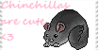 Chinchillasarecute