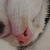 chokitmilk's avatar