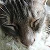 chris128pilgrim's avatar