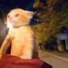 chubbybunny125's avatar
