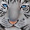 Claracougarteams1's avatar