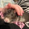 CleoYolandi's avatar