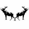 cloningmoose's avatar
