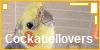Cockatiellovers's avatar