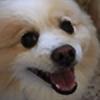 Coconut-Fuzz's avatar