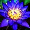 ColorSpirit23's avatar