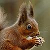 CometStarss's avatar