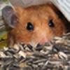 Conquie's avatar