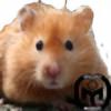 CopperHamster's avatar