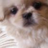 corky98's avatar