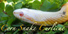 Corn-Snake-Curlicue's avatar