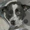 CosmicCream's avatar