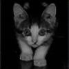 coth-rus's avatar