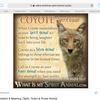 Coyoteprime1100's avatar