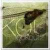 Cphunterlook's avatar