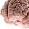 cranial-concept's avatar
