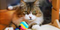 Crazy-4-Animals's avatar