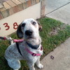 Crazycat2007's avatar