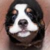 cre8ivegirl's avatar