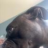 cristalfox31's avatar