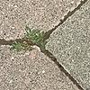 crotijak's avatar