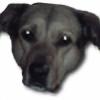 CrushKill's avatar