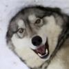 CrypticKamotz's avatar