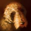 crystalcaldy's avatar