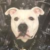 CSSpan's avatar