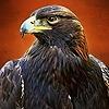 CTK-Aquila's avatar