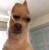 cuddlymeme's avatar