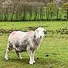 CumbriaPhotos's avatar