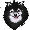 CuriousCollie's avatar
