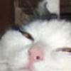 cursedguccishoes's avatar