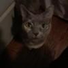 cutecoolcats12345's avatar