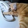 cwchien's avatar