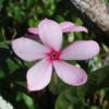 cxxxberry's avatar