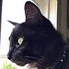 Cynical-V0id's avatar