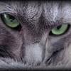 Cynistr1408's avatar