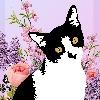 cyntsilva's avatar